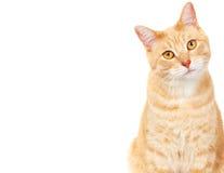 宠物猫。 库存图片