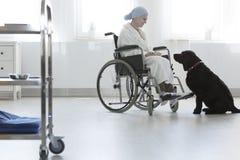 宠物疗法的住院病人 免版税库存照片