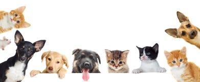宠物的汇集 图库摄影