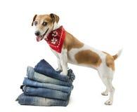 宠物的牛仔布汇集 免版税库存图片