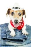 宠物的牛仔布汇集 免版税库存照片