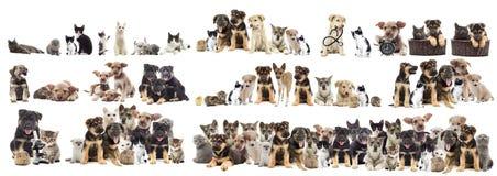 宠物设置了 免版税库存图片