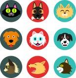 宠物象(狗和猫) 图库摄影