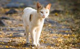 宠物逗人喜爱的室外白天自然 库存图片