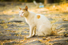 宠物逗人喜爱的室外白天自然 库存照片