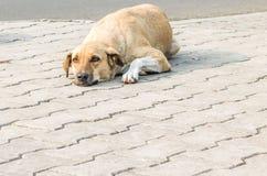宠物逗人喜爱的室外白天自然 免版税库存照片
