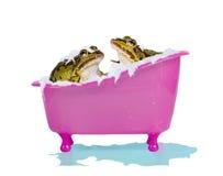 宠物青蛙的泡末浴 免版税库存照片