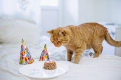 宠物食品蛋糕为猫生日 库存图片