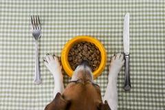 宠物饮食 库存照片