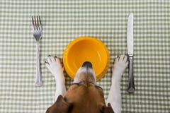 宠物饮食 图库摄影