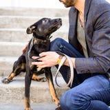 宠物黑色与人的杂种护羊狗 库存图片