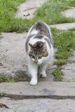 宠物,一只野生猫?谁知道?他是很好奇和滑稽的您能` t做别的,但是爱他 这里` s猫喜欢没有其他 库存照片