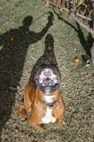 宠物,狗 图库摄影
