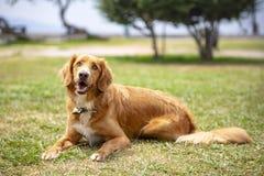 宠物;室内逗人喜爱的狗 免版税库存图片