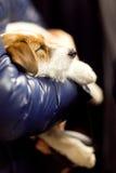 宠物 免版税图库摄影