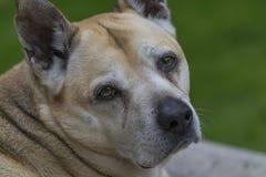宠物 免版税库存照片