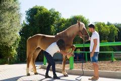 审查一匹母棕色马的hoofs的年轻夫妇 免版税库存图片