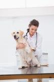 审查一条逗人喜爱的狗的微笑的兽医 图库摄影