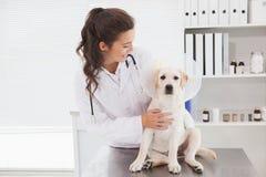 审查一条逗人喜爱的狗的微笑的兽医 库存照片