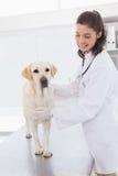 审查一条逗人喜爱的狗的快乐的狩医 免版税库存照片
