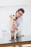 审查与听诊器的兽医一条逗人喜爱的狗 库存照片
