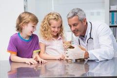 审查与它的所有者的兽医一只逗人喜爱的猫 图库摄影