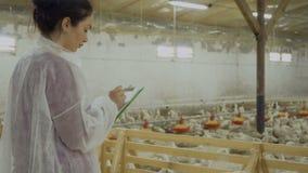 审查员写看有鸭子的报告小牧场家禽场 影视素材