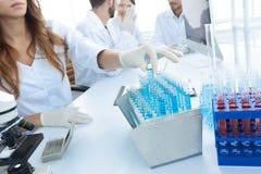 审查在有试管的实验室的科学家 库存照片