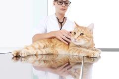 审查在桌上的兽医医生一只姜红色猫在v 免版税库存照片