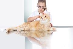 审查在桌上的兽医医生一只姜红色猫在v 免版税图库摄影
