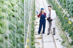 审查工业种植园的科学家 免版税库存照片
