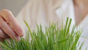 审查绿色植物,植物学家的生化学家妇女学习有机蔬菜 股票录像