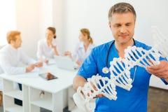 审查脱氧核糖核酸模型的成熟男性医生在工作 库存照片