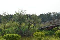审美中国庭院桥梁 免版税库存照片