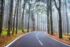 审阅一棵有薄雾的黑暗的神奇杉木f的柏油路 免版税库存图片