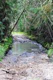 审阅水和泥的atv足迹的部分 库存图片