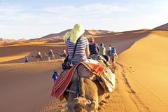 审阅沙丘的骆驼有蓬卡车在撒哈拉大沙漠, 图库摄影