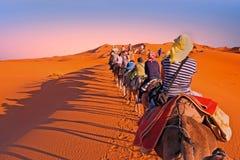 审阅沙丘的骆驼有蓬卡车在撒哈拉大沙漠, 免版税库存图片