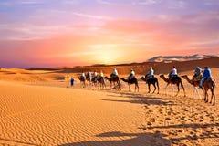 审阅沙丘的骆驼有蓬卡车在撒哈拉大沙漠, 免版税库存照片