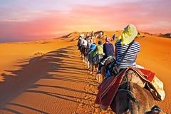 审阅沙丘的骆驼有蓬卡车在撒哈拉大沙漠, 库存照片