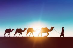 审阅沙丘的骆驼有蓬卡车在撒哈拉大沙漠 免版税库存照片