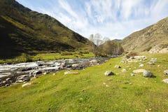 审阅绿色山谷的山河在与美丽的白色云彩的一个夏天晴天在天空,阿尔泰 免版税库存照片