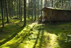 客舱晴朗森林的早晨 免版税库存照片