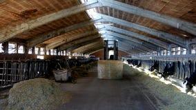室内奶牛场 免版税库存照片