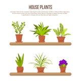 室内房子植物和花的汇集在罐 库存照片