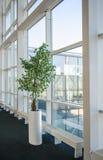 室内树,在3月的大玻璃窗顿涅茨克机场附近 库存照片