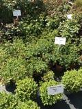 室内植物和庭园花木室外供营商 库存图片