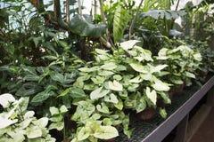 室内植物的不同的类型自温室 免版税图库摄影