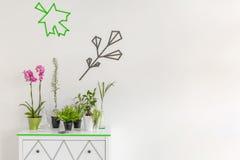 室内植物装饰想法 免版税库存图片