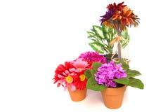 室内植物 库存图片